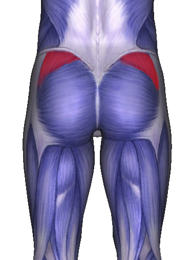 The Importance of Gluteus Medius and Running